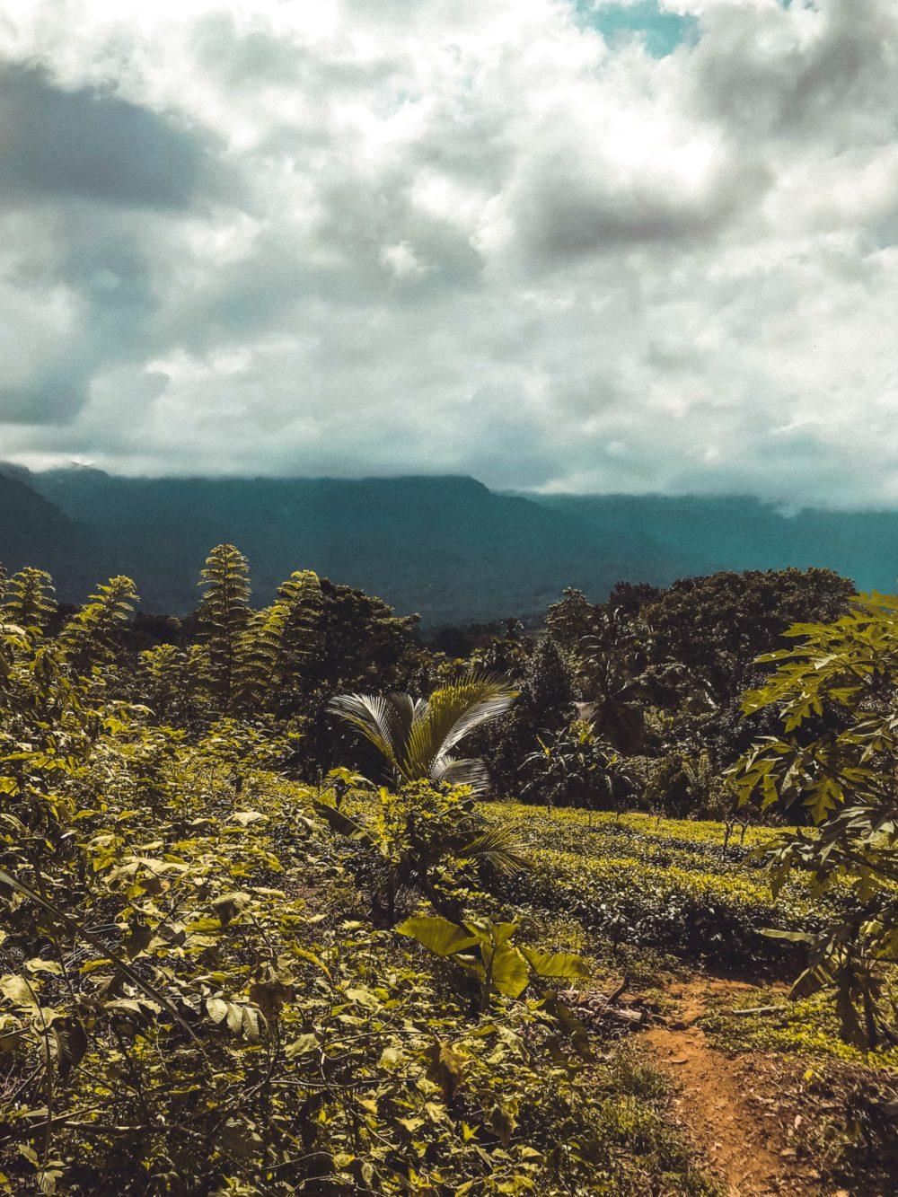 Sourcing Sapphires in Ratnapura, Sri Lanka